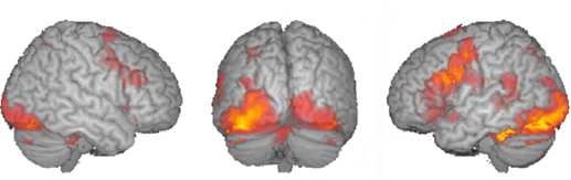 fmri measuring brain response