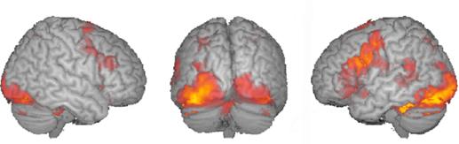 fmri measuring brain response