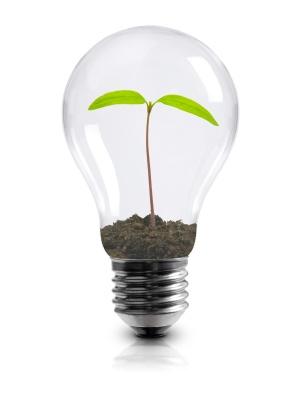 Light_bulb_with_plant.jpg