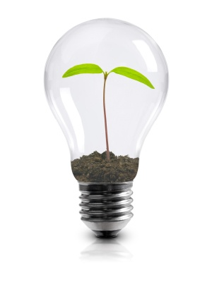 Light_bulb_with_plant.jpg