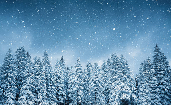Wintry forest.png